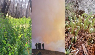 Fire in the alps: bush regeneration, fire fighters, fern regeneration