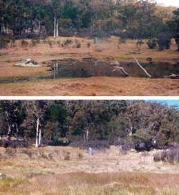 Feral horse impact at Smokers Flat, Namadgi National Park (ACT), before and after.