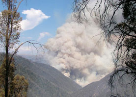 The Hermit Mountain fire crossing from Victoria into New South Wales.