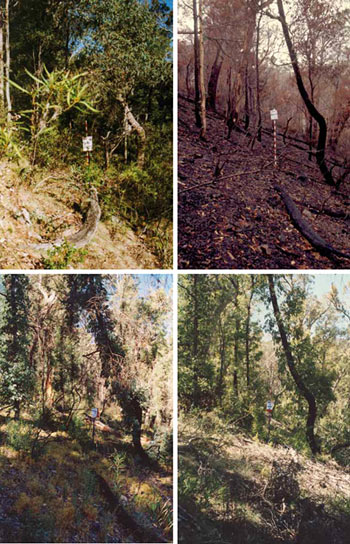 A series of images taken of one of the fire ecology plots set up in Namadgi National Park taken in 1997; then in April after the 2003 fires; then 2004 and 2007.