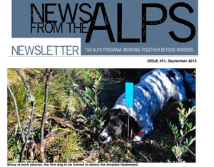 News from the Alps #51 image